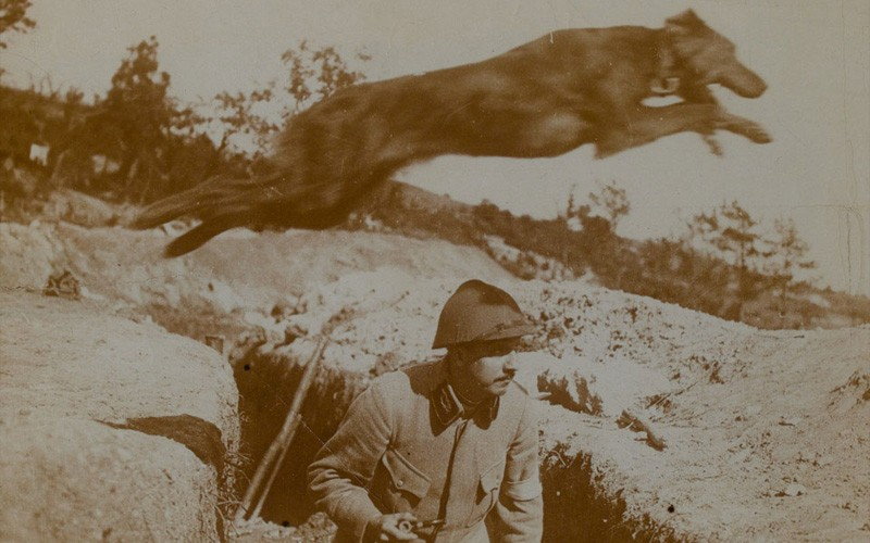 A message dog leaping over a French soldier in a trench, c1916