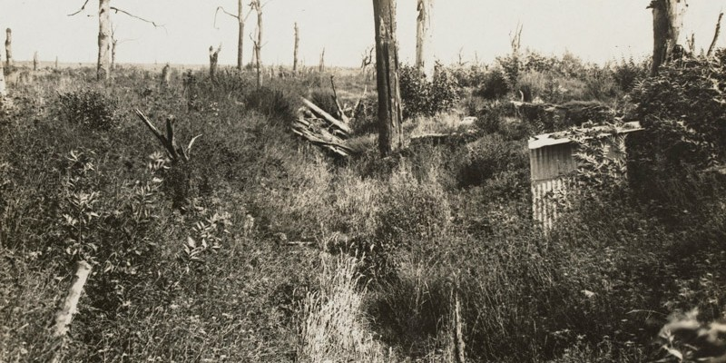 'Scene in Trones Wood as it appears today', Autumn 1917