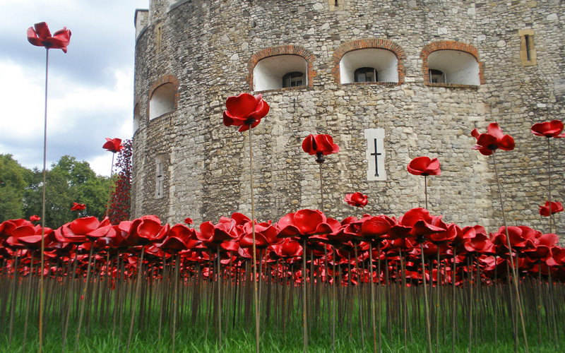 Poppies at the Tower of London, 2014